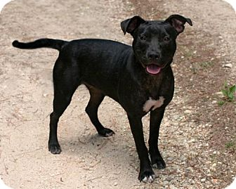Pit Bull Terrier Mix Dog for adoption in New City, New York - Sadie