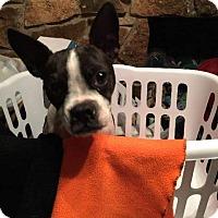 Adopt A Pet :: Midge - Weatherford, TX