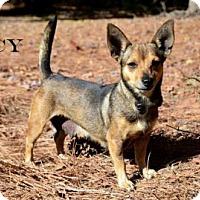 Adopt A Pet :: Lucy - Willingboro, NJ