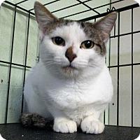 Adopt A Pet :: Razberry - Reeds Spring, MO