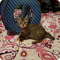Adopt A Pet :: Tweet - Parker Ford, PA