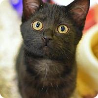 Adopt A Pet :: Zabani - Aiken, SC