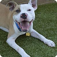 Adopt A Pet :: MICKEY - Memphis, TN