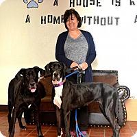 Adopt A Pet :: Madison ADOPTED - Goodyear, AZ