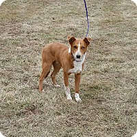 Adopt A Pet :: Darwin - Cameron, MO