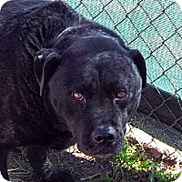 Adopt A Pet :: Louie - Bonsall, CA