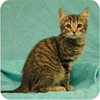Adopt A Pet :: Mike - Sacramento, CA