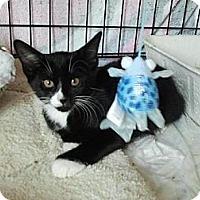 Adopt A Pet :: Stewy (KL) - Little Falls, NJ