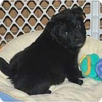 Adopt A Pet :: Chynna - Minneola, FL