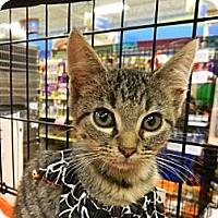 Adopt A Pet :: Elantra - The Colony, TX