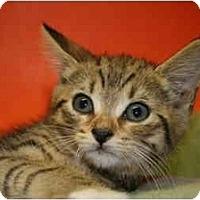 Adopt A Pet :: SANDRA - SILVER SPRING, MD