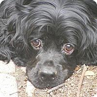 Adopt A Pet :: Trinket - Toledo, OH