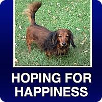 Adopt A Pet :: Walter - Morrisville, PA