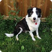Adopt A Pet :: Bandit - Saskatoon, SK