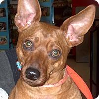 Adopt A Pet :: Mini 2015 (m/c) - Chesterfield, MI