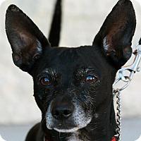 Adopt A Pet :: Reggie - Palmdale, CA
