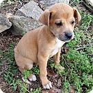 Adopt A Pet :: Bijou!