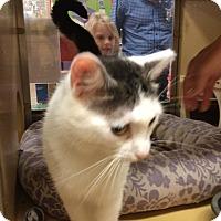 Adopt A Pet :: Sierra - Monroe, GA