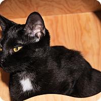 Adopt A Pet :: Serena - Morganton, NC