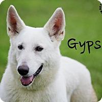 Adopt A Pet :: Gypsy - Joliet, IL