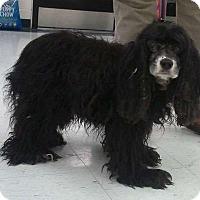 Adopt A Pet :: Pepper - Sudbury, MA