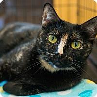 Adopt A Pet :: Nubia - Los Angeles, CA