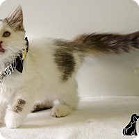 Adopt A Pet :: FLOOF - Sandusky, OH