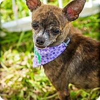 Adopt A Pet :: Betty - Davie, FL