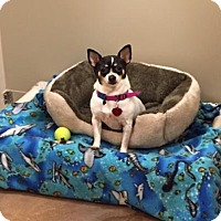 Adopt A Pet :: Lola - Philadelphia, PA