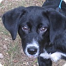 Adopt A Pet :: Palmer