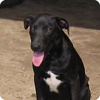 Adopt A Pet :: Logan-Read About Me! - Marlborough, MA