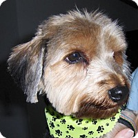 Adopt A Pet :: Lucy Lee - Sinking Spring, PA