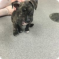 Adopt A Pet :: Glenn - Phoenix, AZ