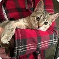 Adopt A Pet :: Kristi - Mission Viejo, CA