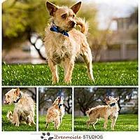 Adopt A Pet :: Cullen - Phoenix, AZ