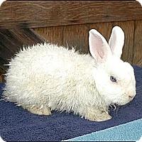 Adopt A Pet :: Cadence - Phoenix, AZ