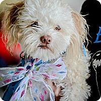 Adopt A Pet :: Mr. Pickles - Redondo Beach, CA