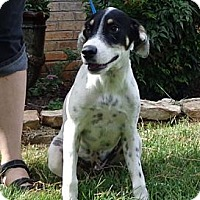 Adopt A Pet :: Jake ($100 off!!) - Brattleboro, VT