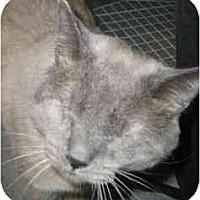 Adopt A Pet :: Bruin - Strathmore, AB