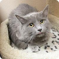 Adopt A Pet :: Abigail - Gilbert, AZ