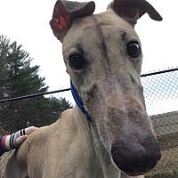 Adopt A Pet :: Cooper - Swanzey, NH