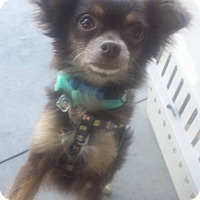 Adopt A Pet :: Hugh Hefner - Scottsdale, AZ