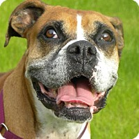 Adopt A Pet :: Baretta - Phoenix, AZ