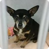 Adopt A Pet :: Hershey - Shawnee Mission, KS