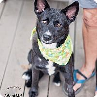 Adopt A Pet :: Nado - Kingwood, TX