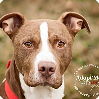 Adopt A Pet :: Roscoe - Mansfield, OH