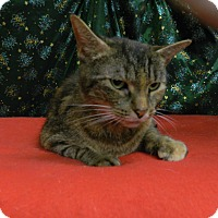 Adopt A Pet :: Gidget - Waldorf, MD
