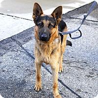 Adopt A Pet :: Joshua- Adopted! - Detroit, MI