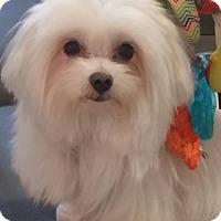 Adopt A Pet :: Sasha - San Dimas, CA
