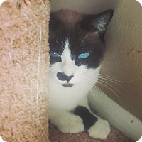 Adopt A Pet :: Coral - Tampa, FL